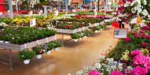 Bardin Garden Center - Lancenigo (TV) - Italie